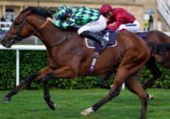 Mathew Flinders Racehorse